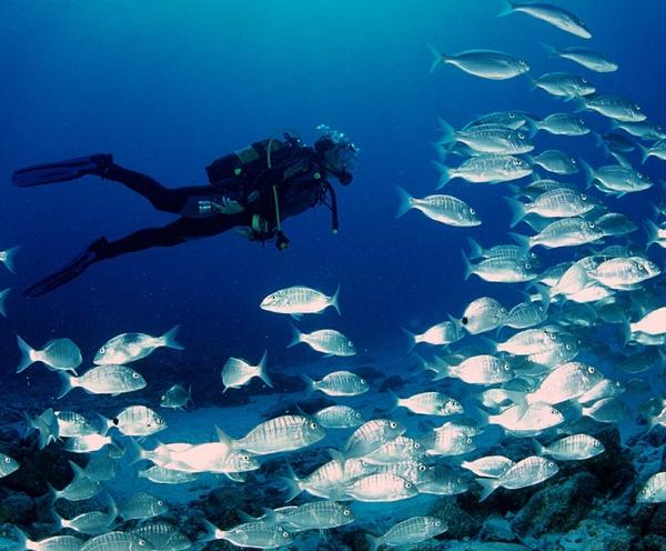 Diving a Mongerbino