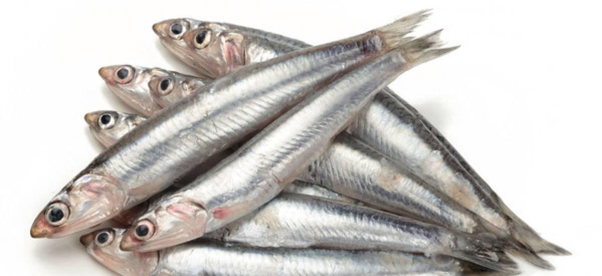 """Sarde e acciughe, il pesce povero re delle """"cucine economiche"""" di fine '800"""